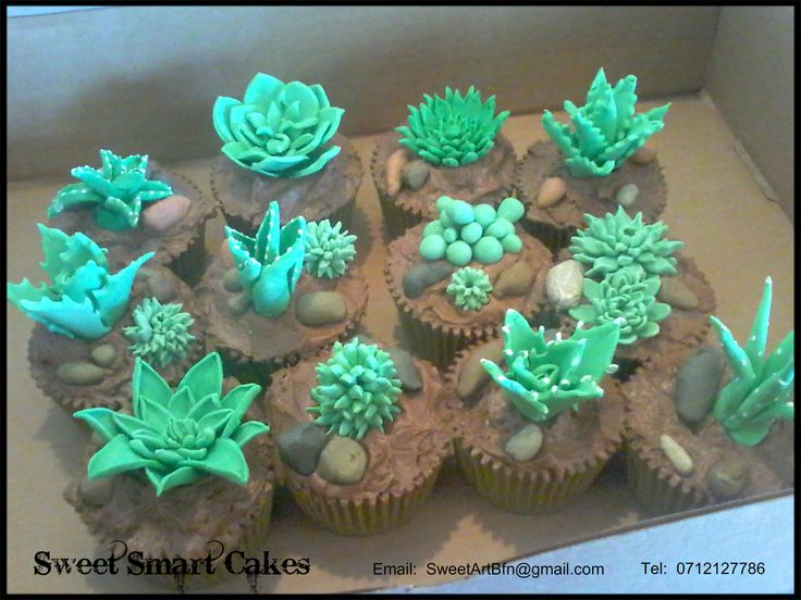 Succulent fondant cupcakes (Bloemfontein, ZA)