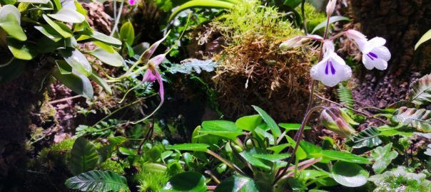 Orchidarium update - Pumpkin Beth