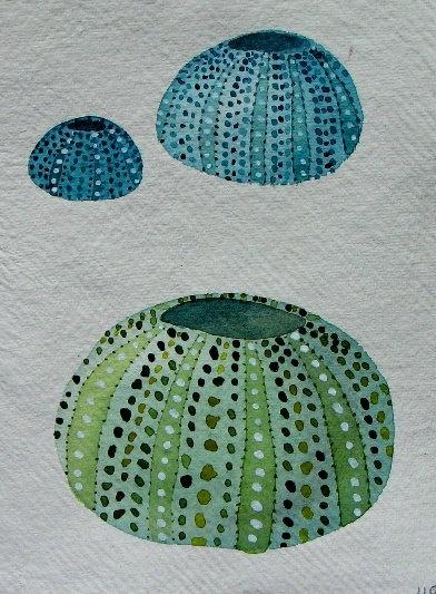 Sea urchin shell original watercolour study illustration painting beach ocean sea set. £30.00, via Etsy.