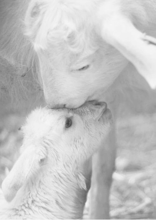 Loving Mother with her adorable lamb:):):)   Fresh start.         Images found on Pinterest Via Tumblr Via deathbyelocutiontumblr.com Gunther Uecker Via petitcabinetdecuriosites Photo via a post from the blog anarosa on bl…
