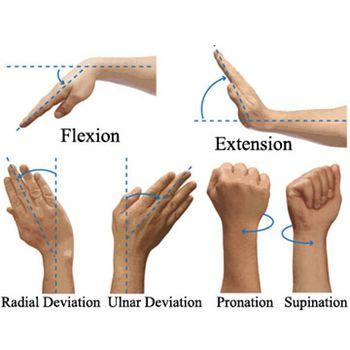 Ejercicios flexión y extensión