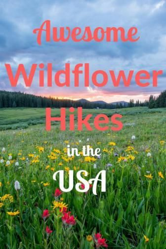 These are some of the prettiest wildflower hikes in the United States. Perfect for Families!