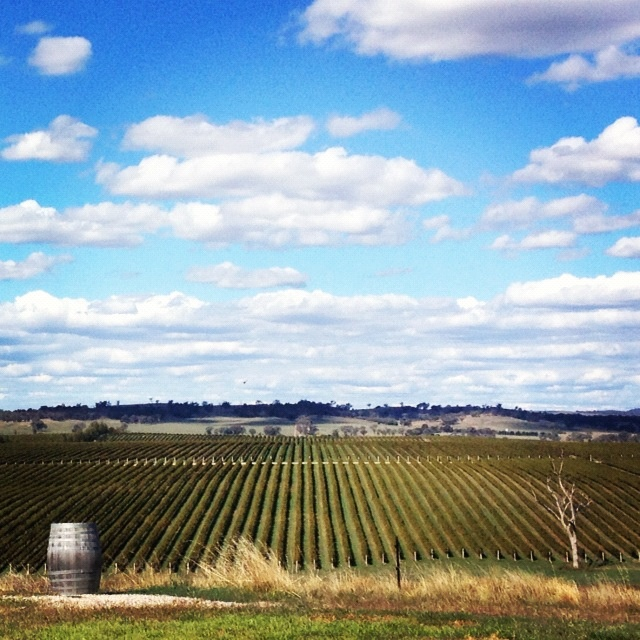 The amazing Cumulus Vineyards In Orange NSW #wine #vineyards #orange