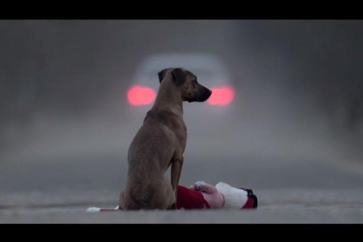 """""""Gift"""" es un cortometraje que muestra la dura realidad del abandono animales, haciendo una analogía con la adopción de niños, personificando a un cachorro destinado a vivir entre refugios y la calle. La historia muestra la vida en una casa en la que deciden adoptar a una niña pequeña, para que ..."""
