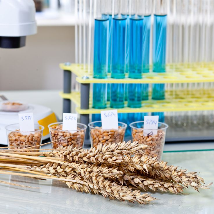 Leiter Produkteinführung & Training (m/w) Diagnostika | Labor Technologie | Lebensmittelüberwachung  Karrierechance für Vertriebsprofi: Sie übernehmen schnell Verantwortung für die Entwicklung Ihrer Großkunden in der Lebensmittelindustrie oder deren beauftragte Dienstleister!