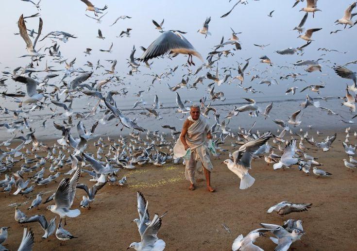 bilder der woche erwischt  vögel im flug bilder anno
