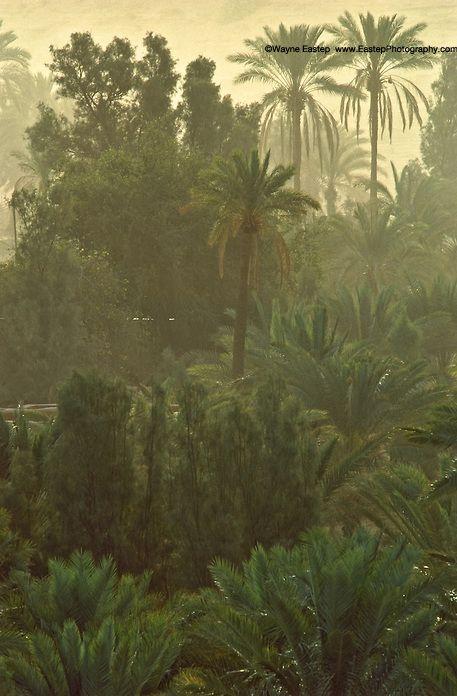 Date palm oasis in central Najd, Saudi Arabia.