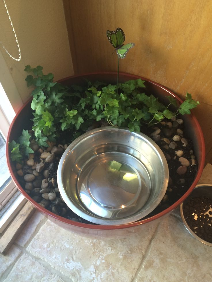 My great danes water bowl. Slobber-water reclaiming system.