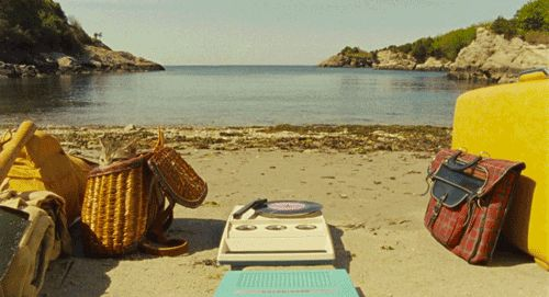 cat animated beach wes anderson moonrise kingdom