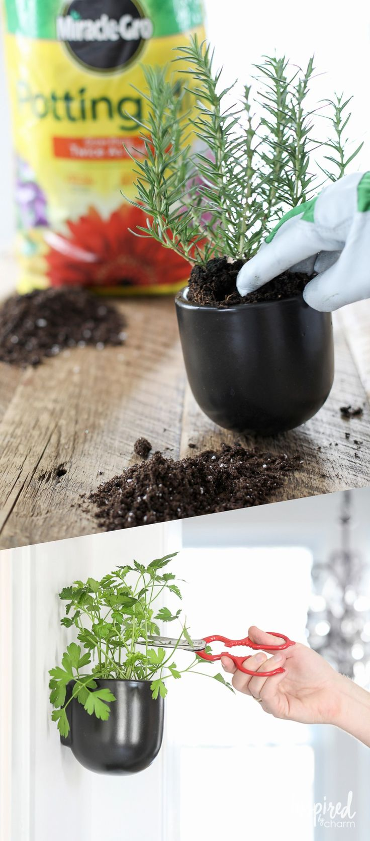 Having fresh herbs on hand is a great tool for vibrant and flavorful entertaining. You can garden & entertain at the same time with herbs planted in @miraclegro Potting Mix. Fresh ingredients are just a snip away. #AndProject [ad]