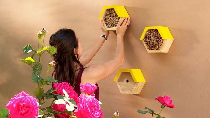 Hágalo Usted Mismo - ¿Cómo hacer un refugio para las abejas?