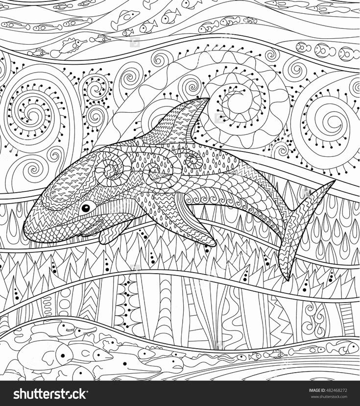Whale Shark Coloring Page Unique 310 Best Coloring Dolphin Whale Shark Images On Shark Coloring Pages Pattern Coloring Pages Whale Coloring Pages