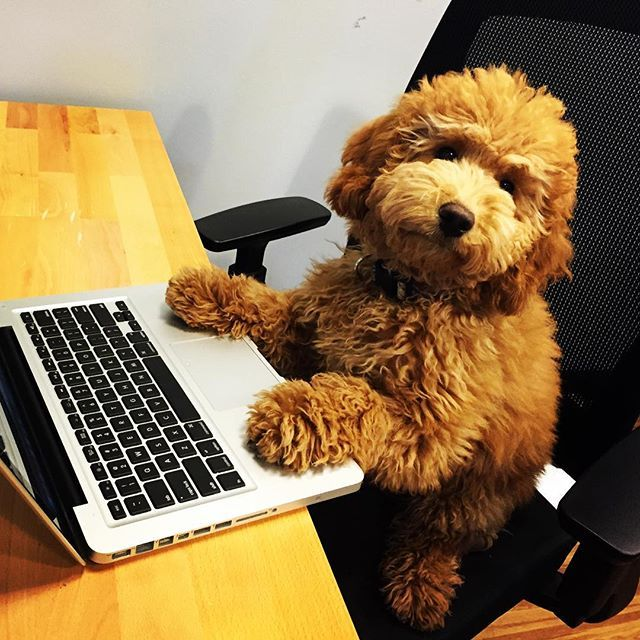 Just catching up on some work at WeWork Fulton Market. From @mobiledoorman #dogsofWeWork