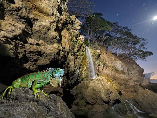 Le 30 foto di animali più belle al mondo