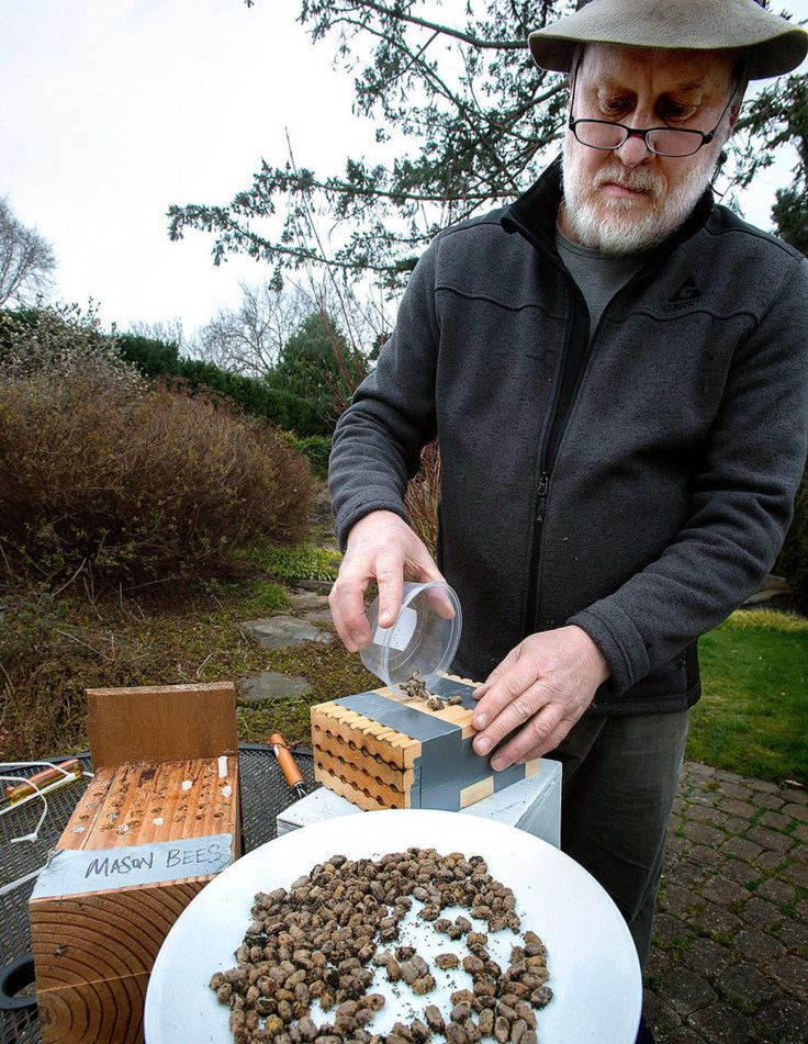 Bee friendly How to keep mason bees and help feed the