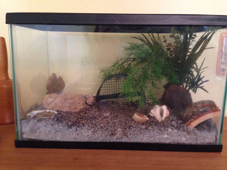 Pin by Carrie Connor on Hermit crabs | Hamster wheel