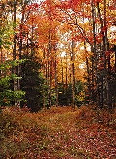I want to live there...Vermont. Maybe just when it looks like that though..