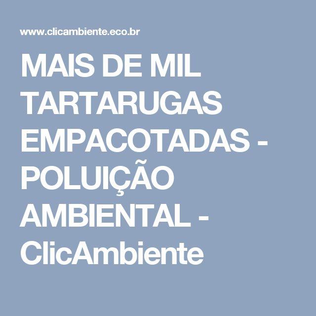 MAIS DE MIL TARTARUGAS EMPACOTADAS - POLUIÇÃO AMBIENTAL - ClicAmbiente