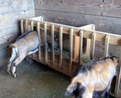 Walls would have to be higher, or the goats would climb inside and defeat the purpose. Lke the design