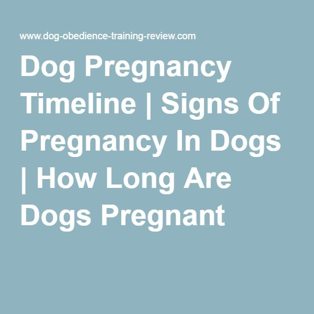 Dog Pregnancy Timeline   Signs Of Pregnancy In Dogs   How Long Are Dogs Pregnant