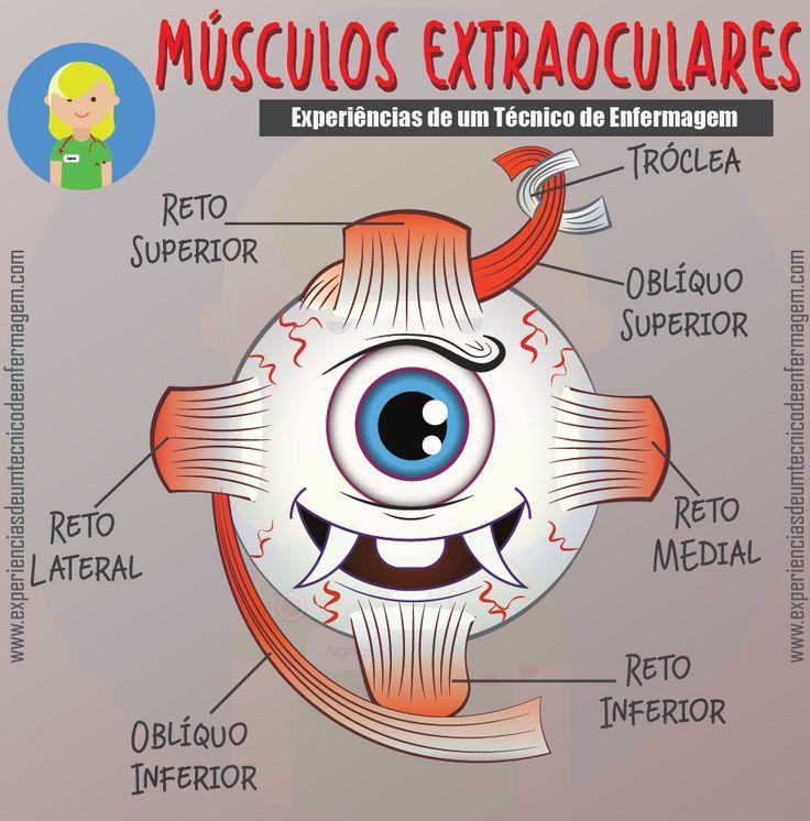 Os Músculos Extraoculares