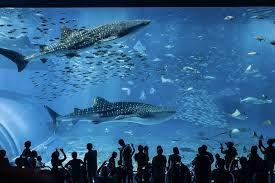 Image result for The Okinawa Churaumi Aquarium in Japan