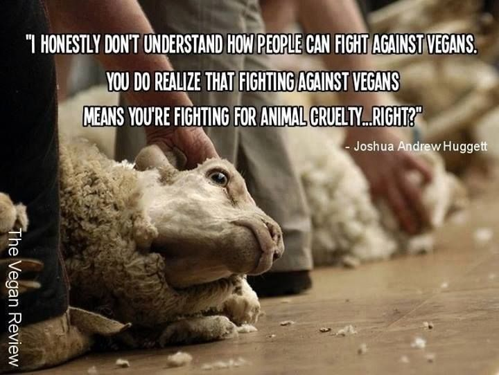 55 Best Images About Against Animal Cruelty (Quotes) On