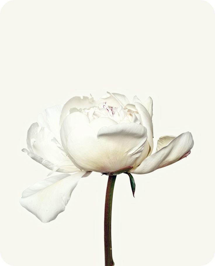 My Dark Whisper. — visualgraphc: Flowers, Bettina Güber