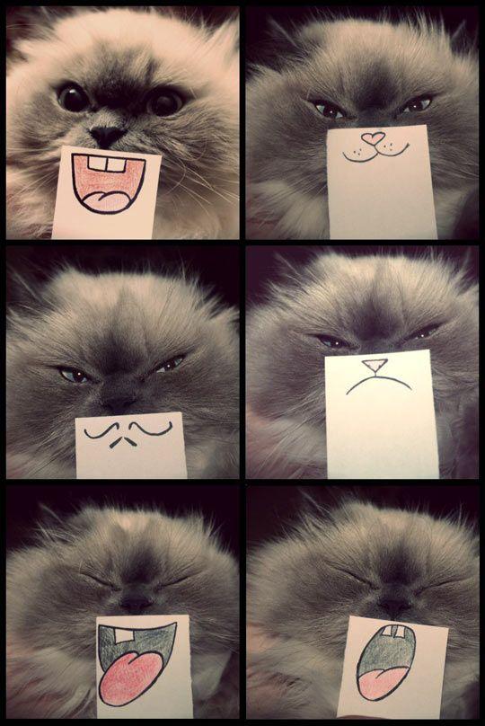 Cat emotions… Yes! @Nicole Novembrino Novembrino Novembrino Diambra I love this!!! @Breanna Newbill Newbill Newbill King @Sam McHardy McHardy Taylor Langford Can't stop laughing!