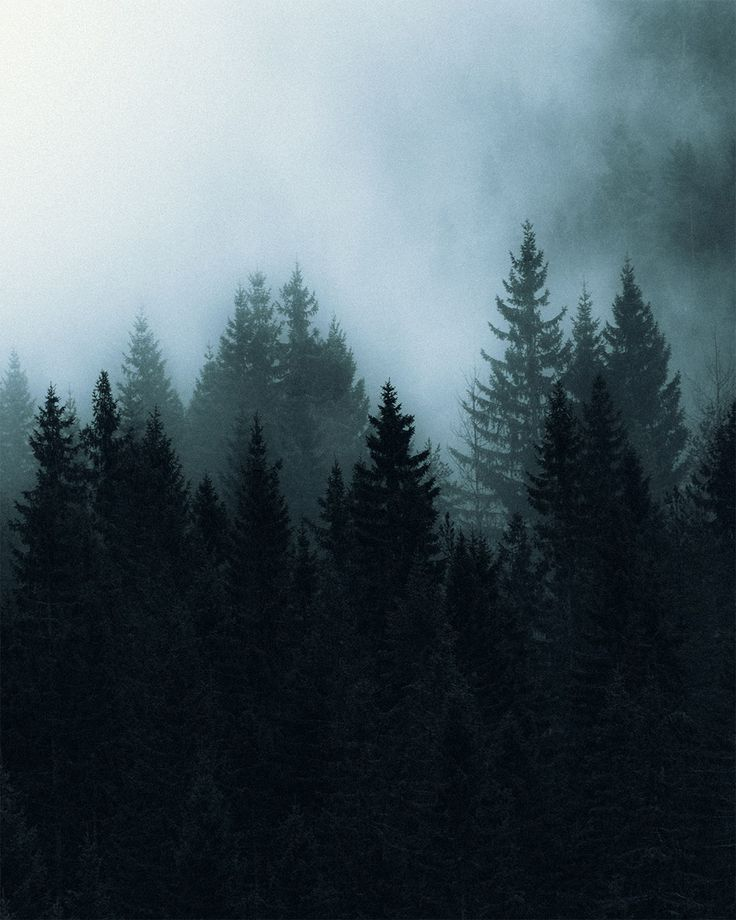 Dark And Moody Forest In 2020 Mountain Landscape Photography Landscape Photography Nature Forest Photography