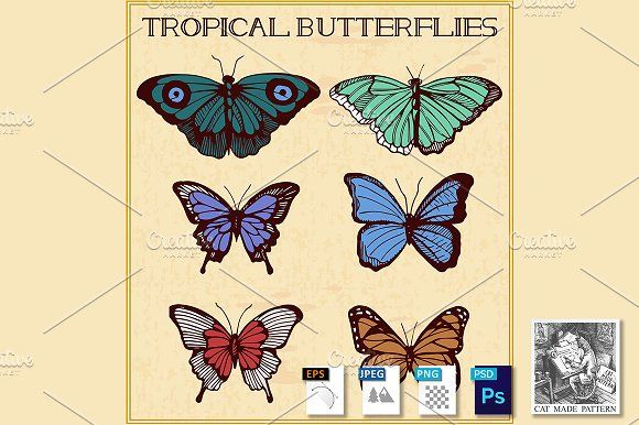 Tropical butterflies in golden frame by CatMadePattern on @creativemarket