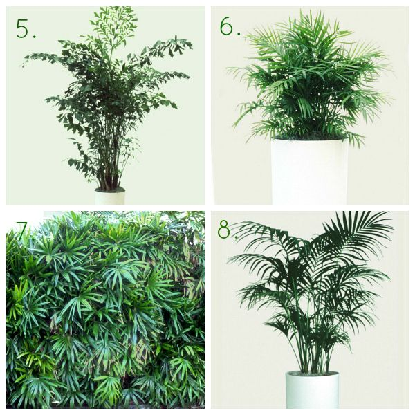 HGTVGardens Indoor Shade Palm Trees1 20 Gorgeous House Plants That Can Take Full Shade