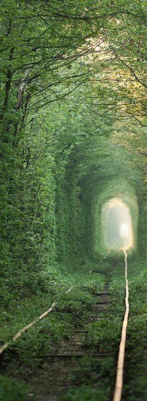 Tunnel of Love or Green Train Tunel in Klevan   Ukraine