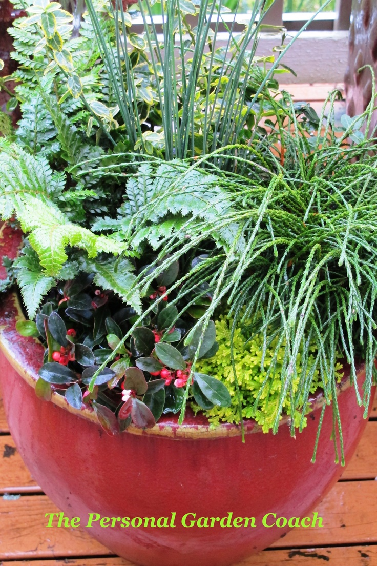 Winter Container Garden Ideas Photograph Winter Container