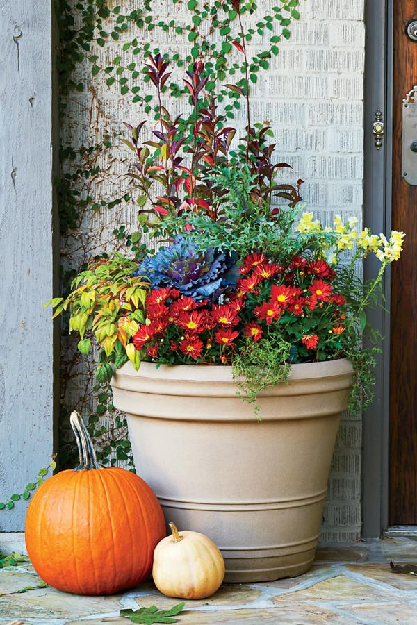 17 best images about container gardens on pinterest