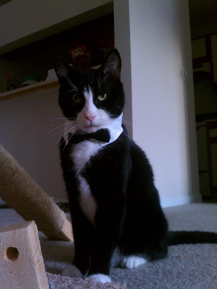 James Bond Cats And Cat Memes I Can Has Cheezburger