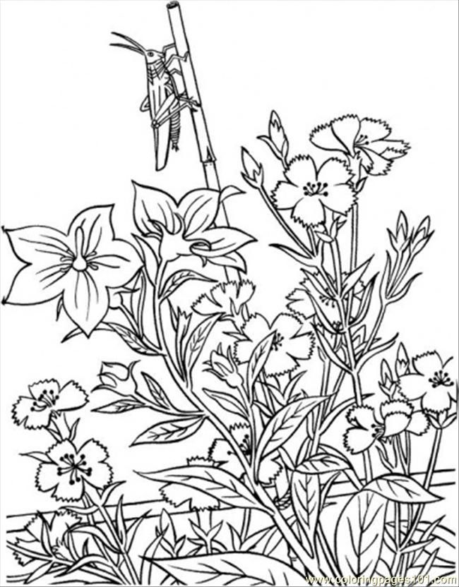 126 best Coloring pages Flowers images on Pinterest | Print coloring ...