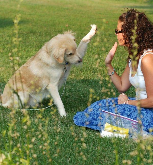 12 lifesaving tricks to teach your dog @KaufmannsPuppy