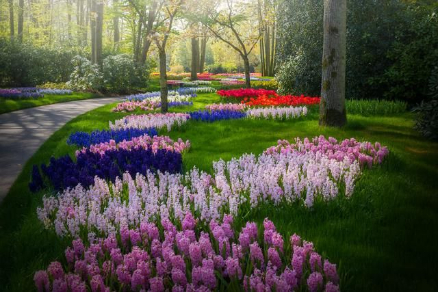 The Most Beautiful Flower Garden In The World Without People My 31 Pics In 2020 Beautiful Flowers Garden Tulips Garden Beautiful Flowers