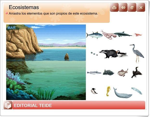"""""""Ecosistemas"""" (Ciencias Naturales de Primaria)"""