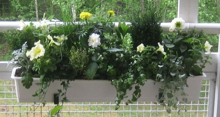 Trädgård & växter - Balkonglådor