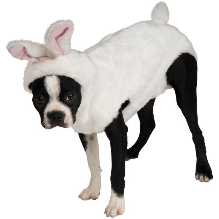 Bunny Pet Costume from BuyCostumes.com #Bunny #PetCostume #DogCostume