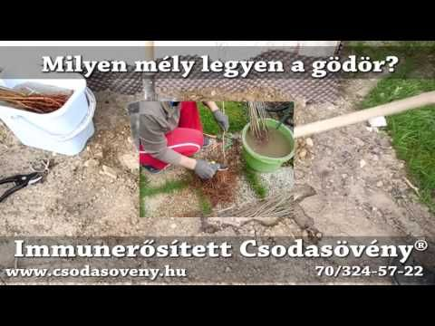 GYIK 33 - Milyen mély legyen a Csodasövény® ültető árok, vagy gödör ? - YouTube
