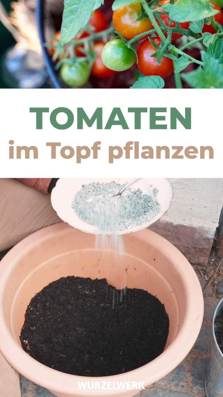 Standort Tomaten Im Topf