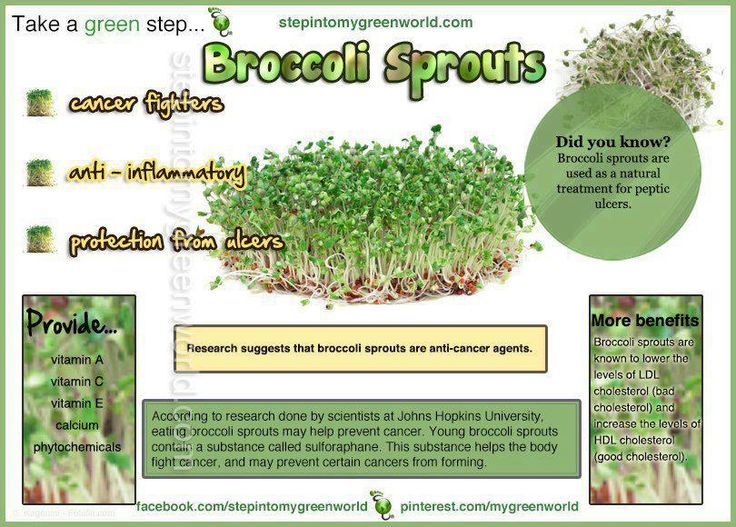 how to use broccoli sprout powder