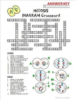 Mitosis Crossword with Diagram {Editable} | Mitosis ...