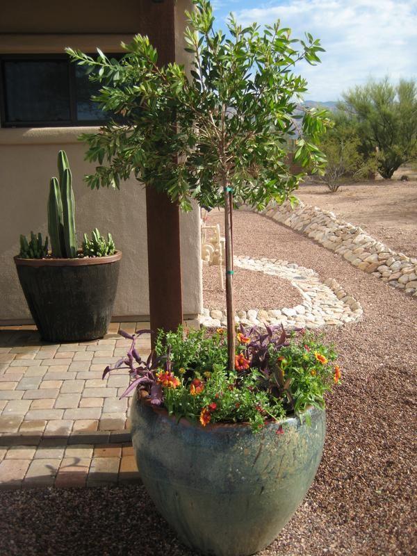 Superior Desert Container Gardening