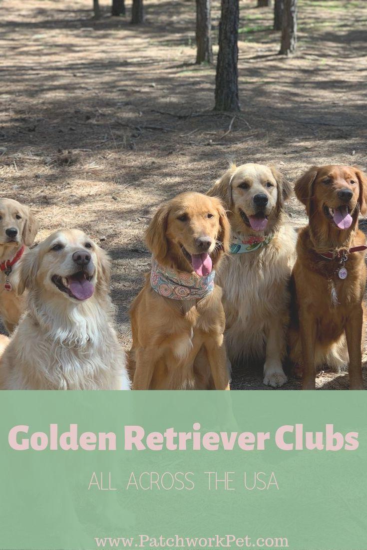 Golden Retriever Meet Up Groups Near You Most Popular Dog Breeds