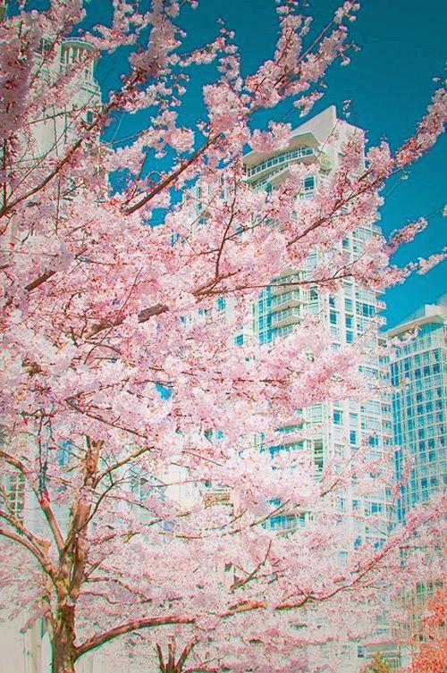 Springtime in the city.