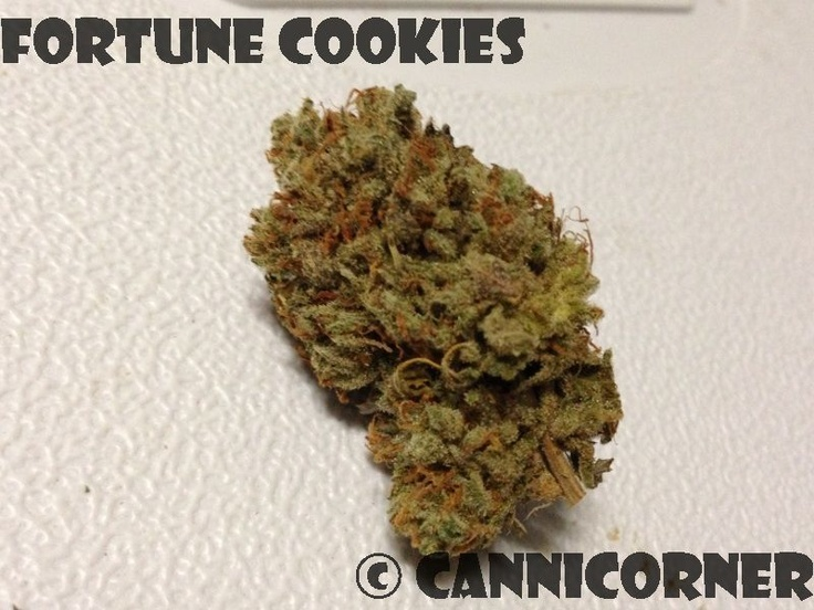 fortune cookies girl scout cookies x og kush cannabis